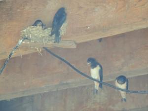 Elles commencent à vouloir sortir du nid