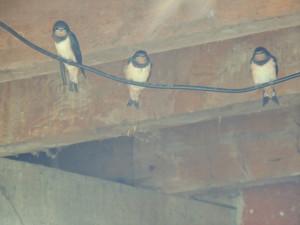 En voilà déjà 3 qui se sont risquées à sortir du nid