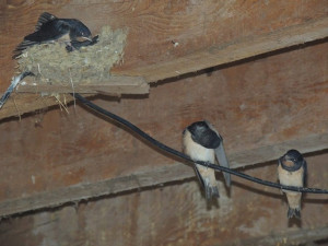 Une autre aussi a fait le tour du nid