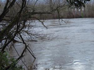 Les branches touchent l'eau de la Garonne qui charrie quelques morceaux de bois